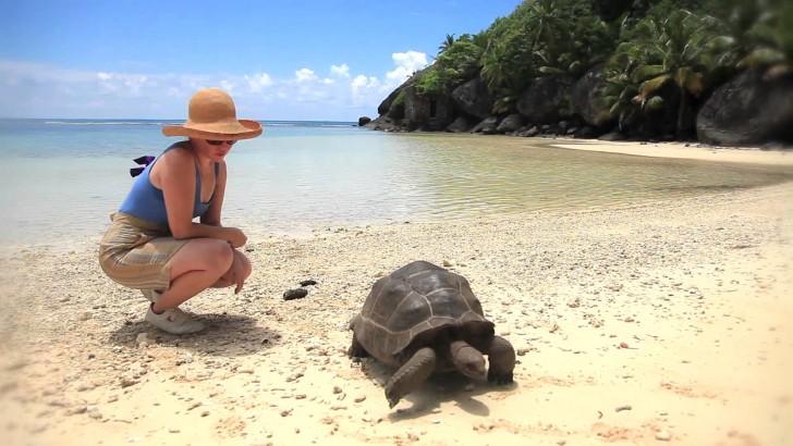 Черепаха на Сейшельских Островах
