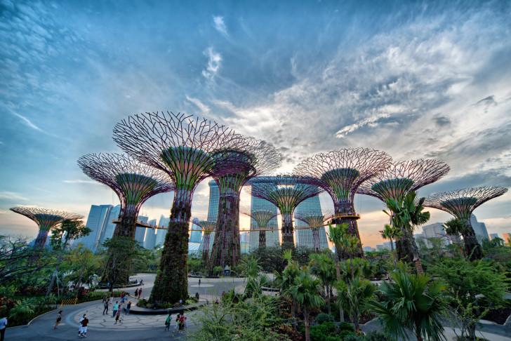 Деревья в Сингапуре